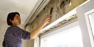 Как бороться с плесенью в доме?