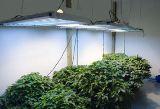 Как устроить зимний сад в городской квартире