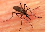 Лёгкий путь к спокойной жизни без комаров и мошек