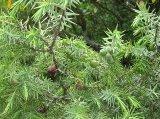 Растения, которые борются за чистоту воздуха