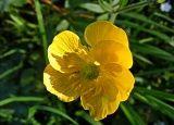 Фитонциды растений - источник целебного воздуха