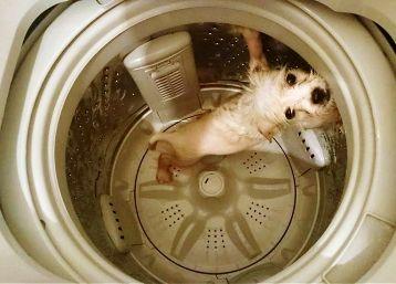 шерсть животных в стиральной машинке (как попадает туда)