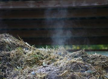 биогаз из растений
