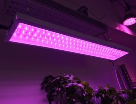 Светодиодные фитолампы для выращивания растений